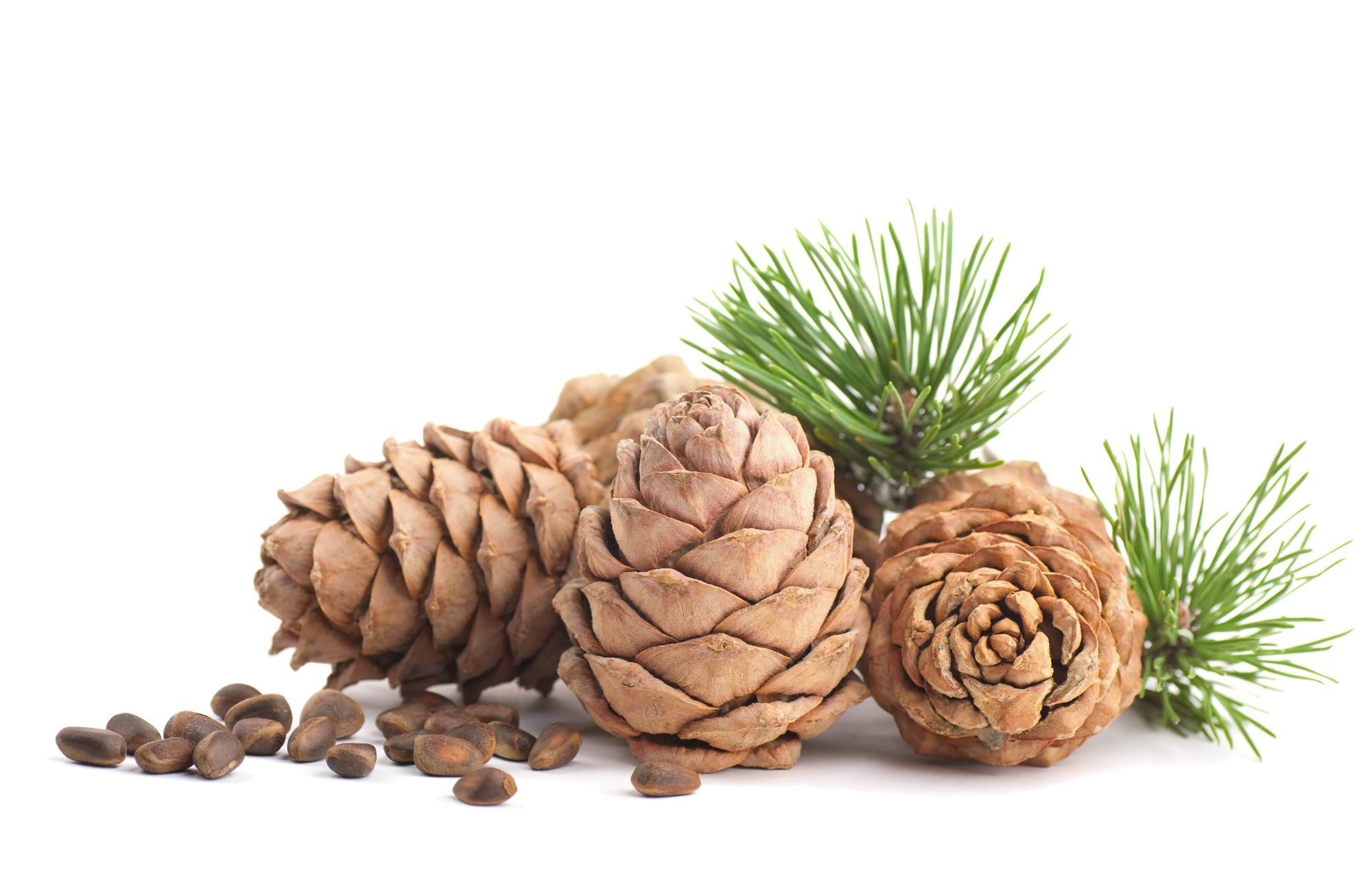 The Best Uses Of Cedarwood Essential Oil
