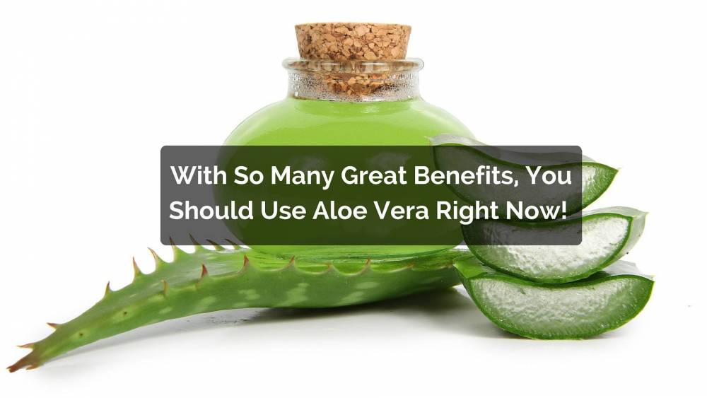 Where can you buy aloe vera