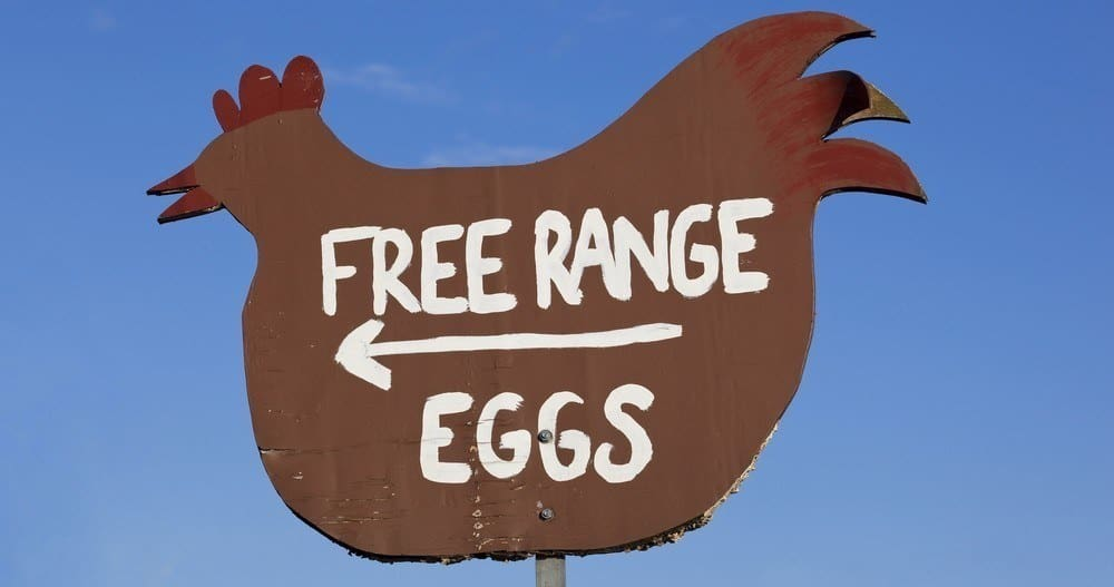 "A chicken-shaped sign saying ""Free Range Eggs."""