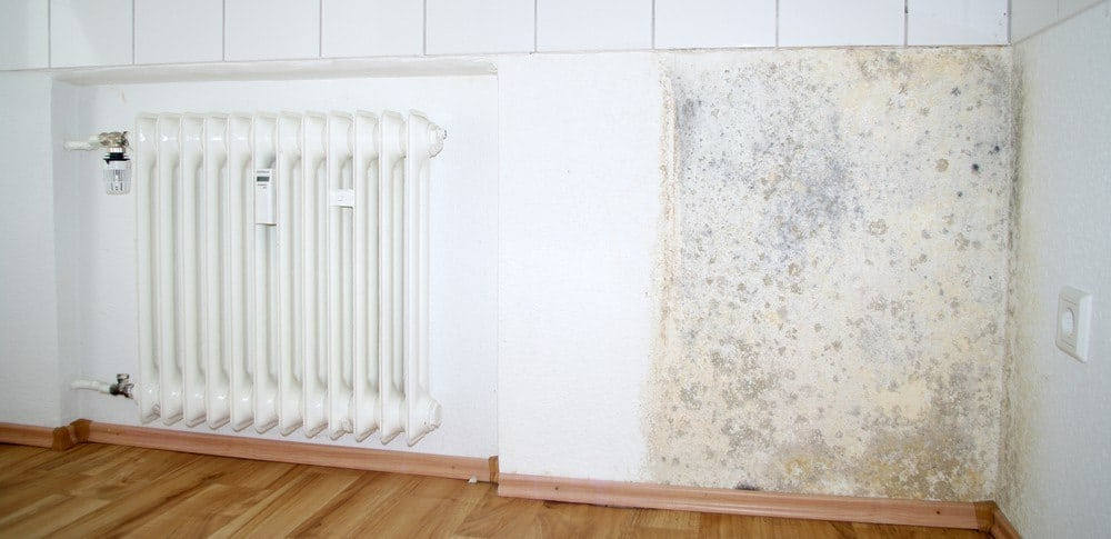 A patch of mold next to a radiator.