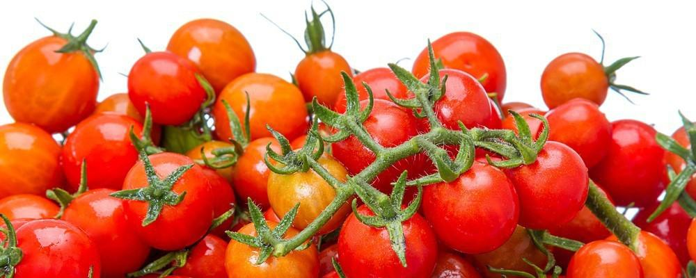 Dozens of tomatoes on a tomato vine.