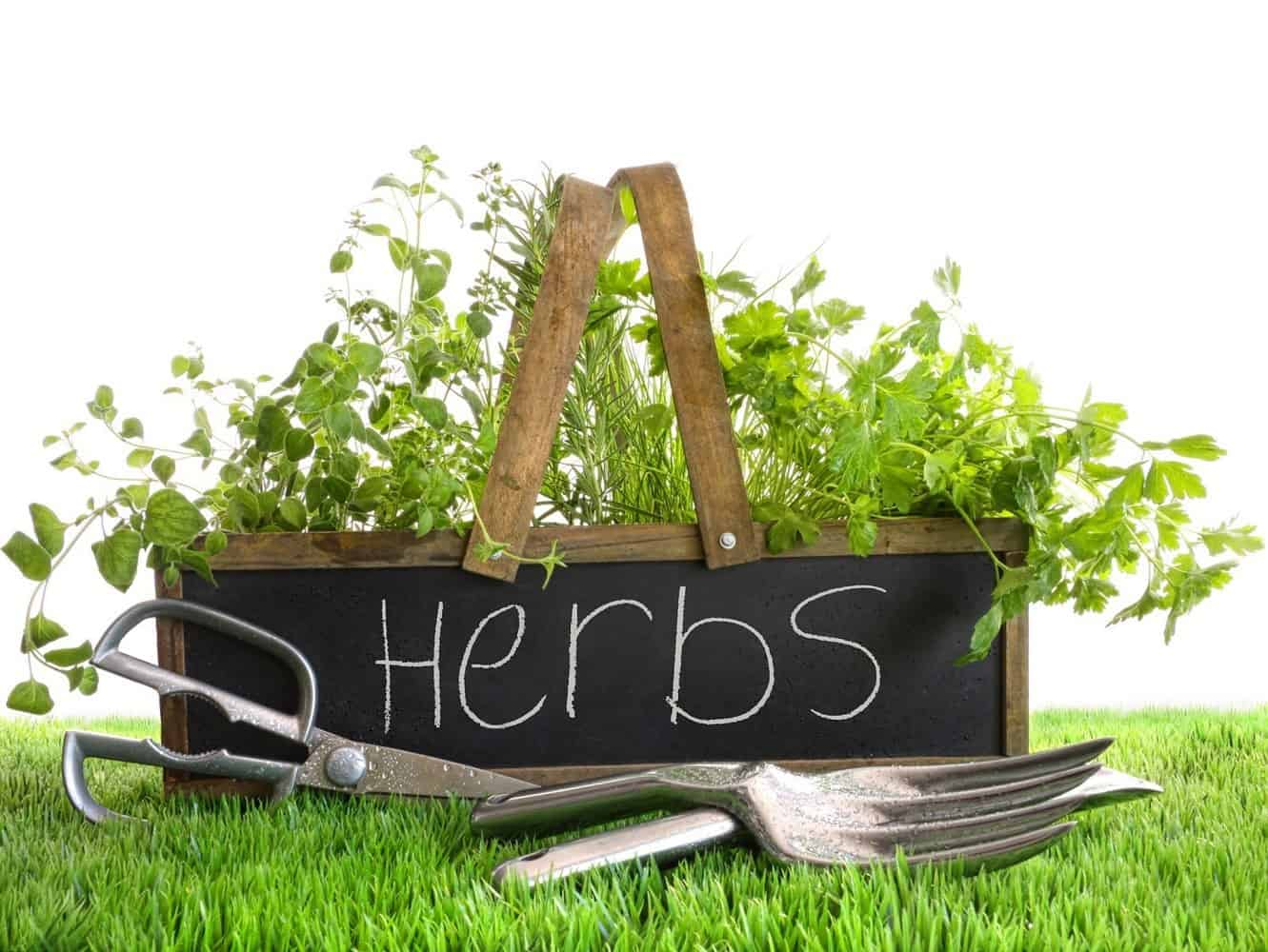 """The sign """"Herbs"""" next to garden tools."""