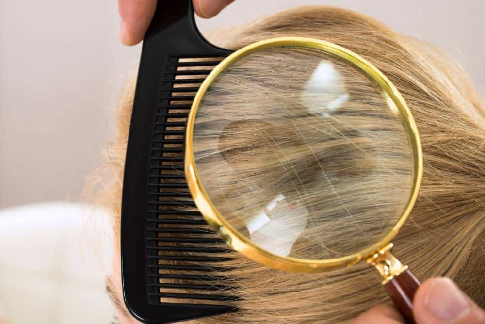 A magnifying glass used to look at a person's hair while being combed for lice.