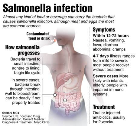 A graphic explaining the characteristics of a salmonella infection.