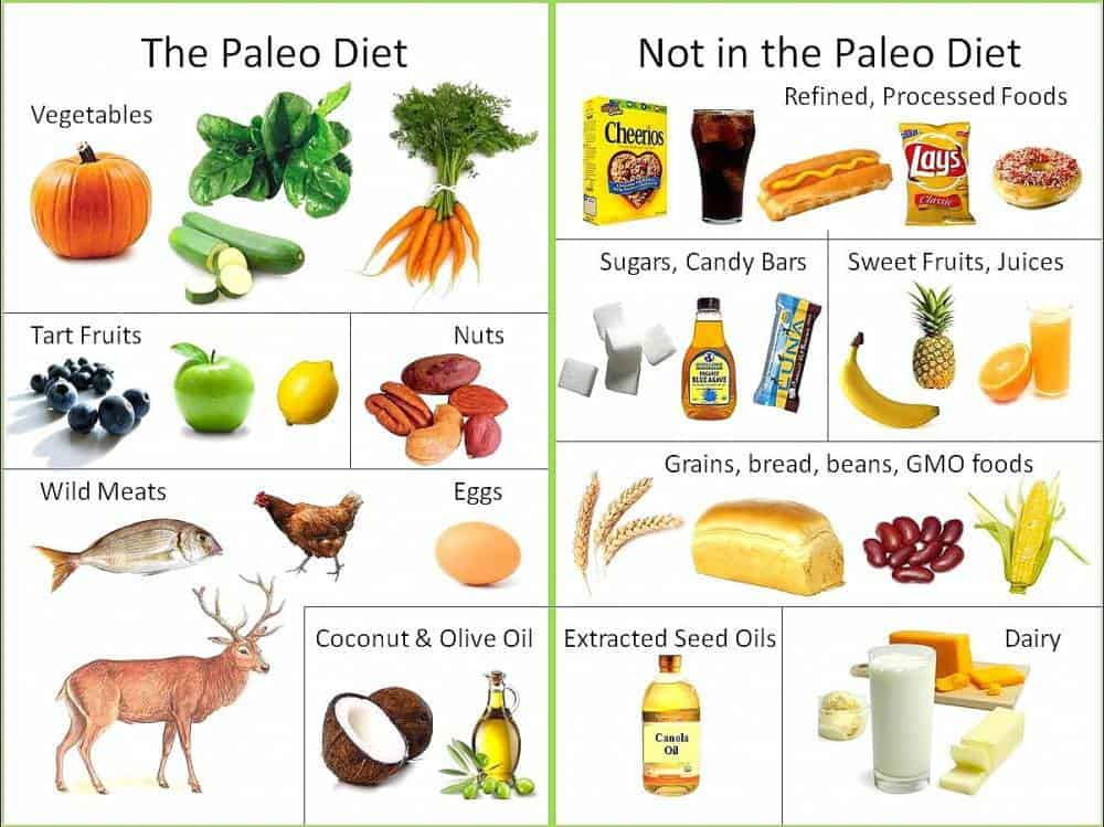 An image showing what is and isn't included in the Paleo Diet.
