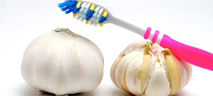 A toothbrush on two heads of garlic.