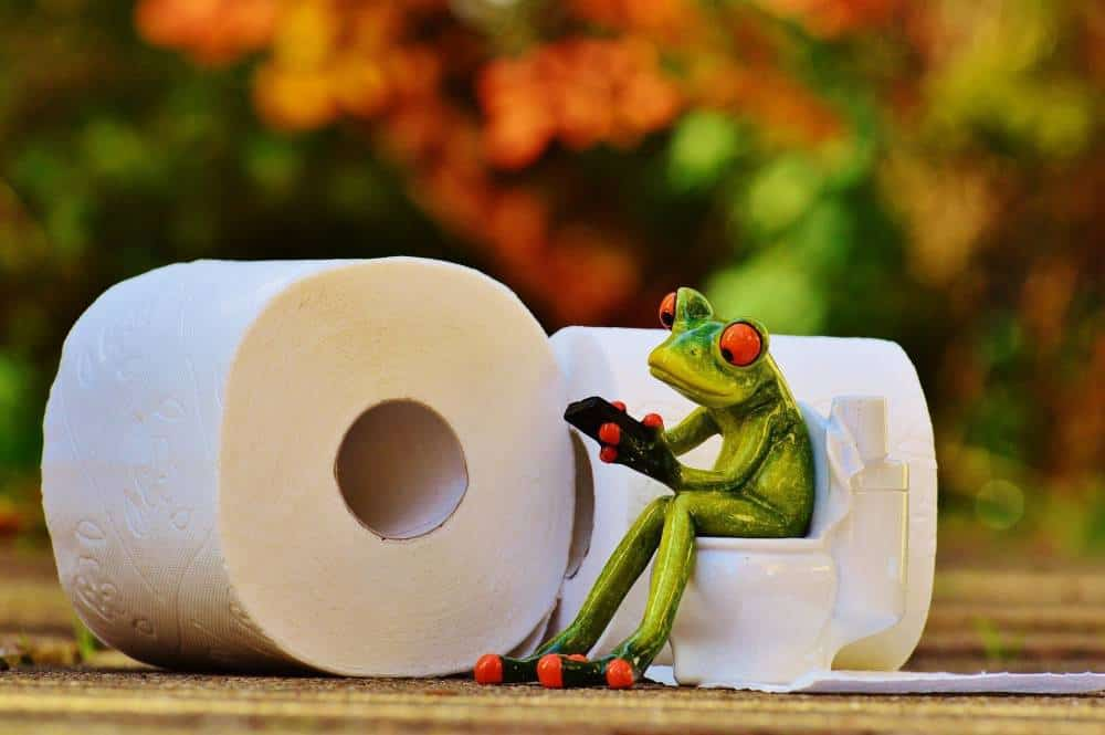 A frog figurine next to rolls of toilet paper.