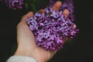 A handful of lavender.