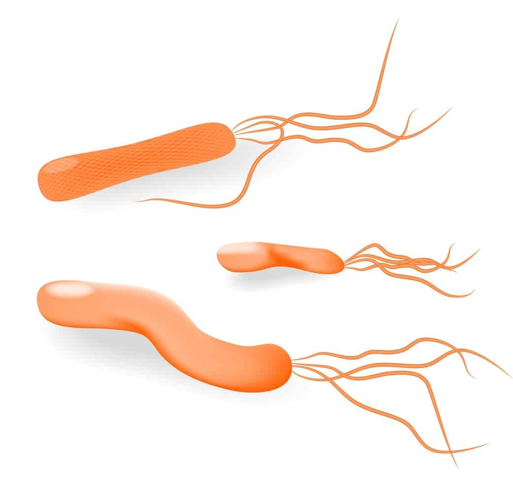 H Pylori Natural Treatment Options