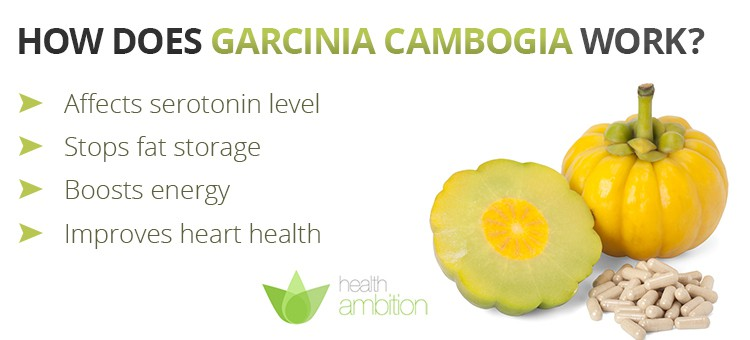 Garcinia Cambogia fruit with a list of how the fruit works.