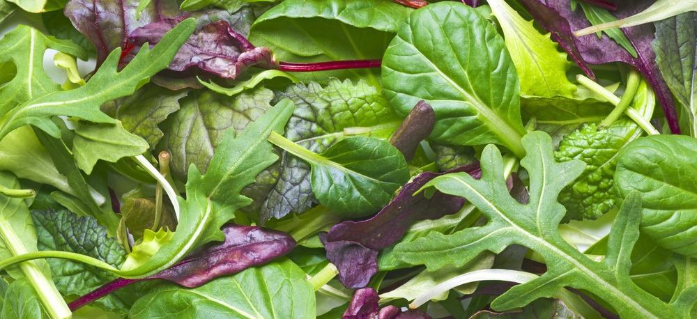 close-up of salad leaves with mostly arugula (rucola).
