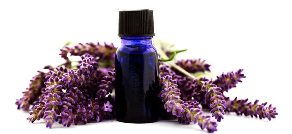 A bottle of lavender essential oil next to a lavender flowers.