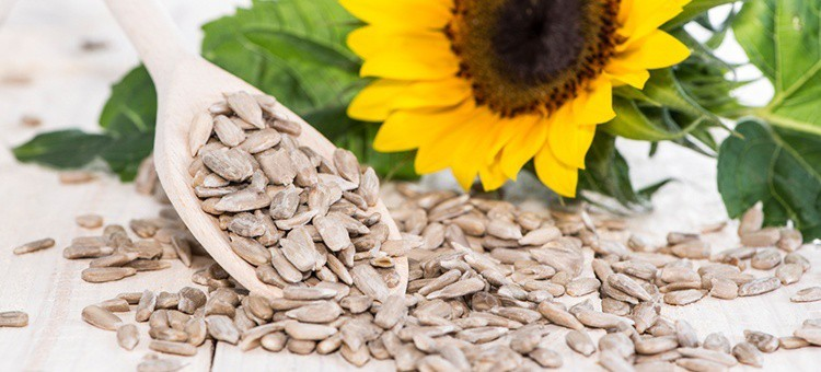 A large handful of sunflower seeds next to a sunflower.