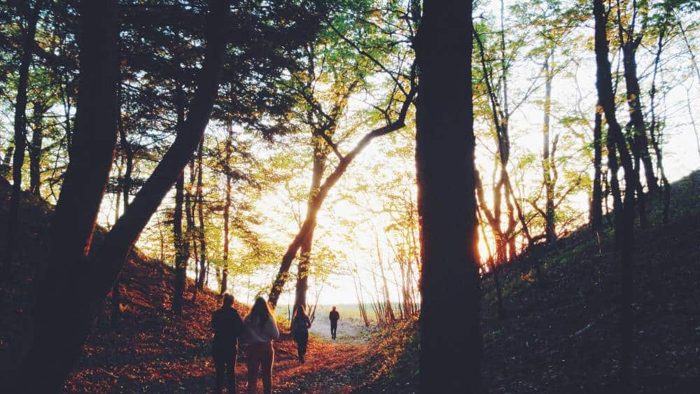 People walking in a forest.