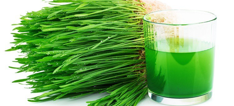 A batch of wheat grass next to a glass of wheat grass juice.