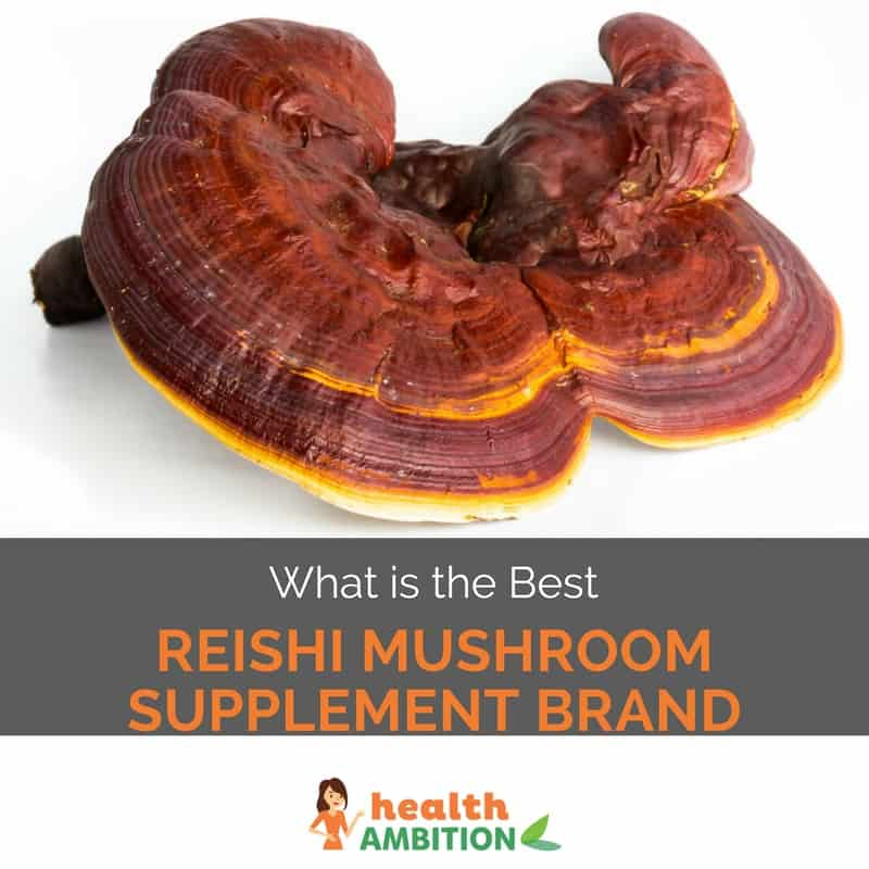"Reishi mushroo mwith the title ""What is the Best Reishi Mushroom Supplement Brand"""