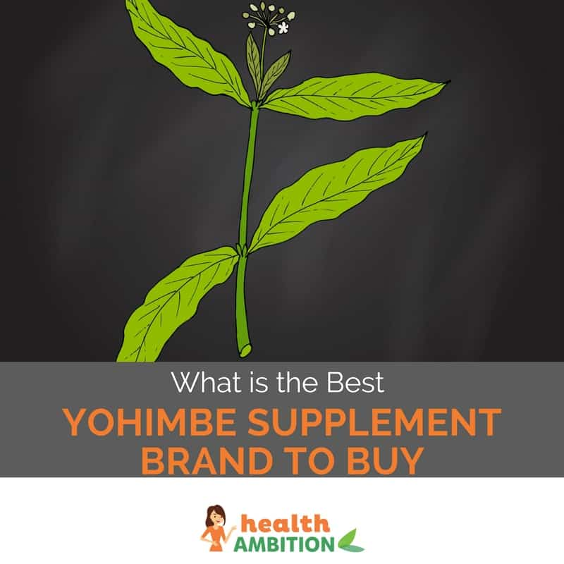 "Drawing of the Yohimba plant with the title ""What is the Best Yohimbe Supplement Brand to Buy"""