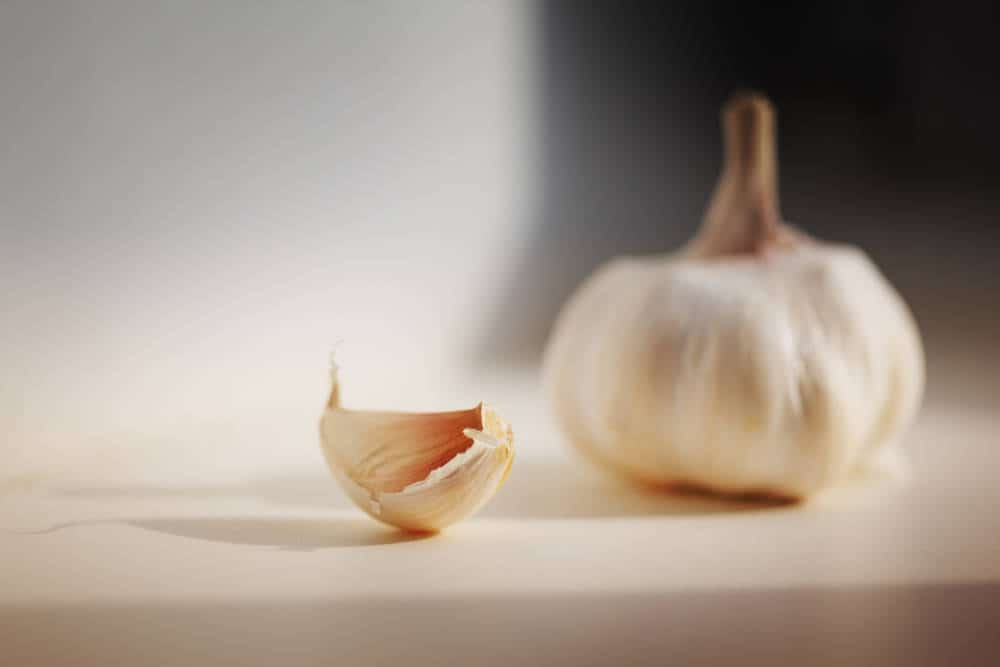 Garlic on kitchen table, macro closeup.