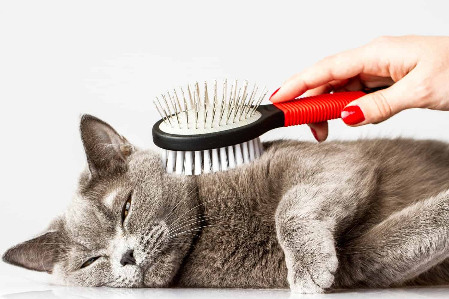 A brush used on a cat.