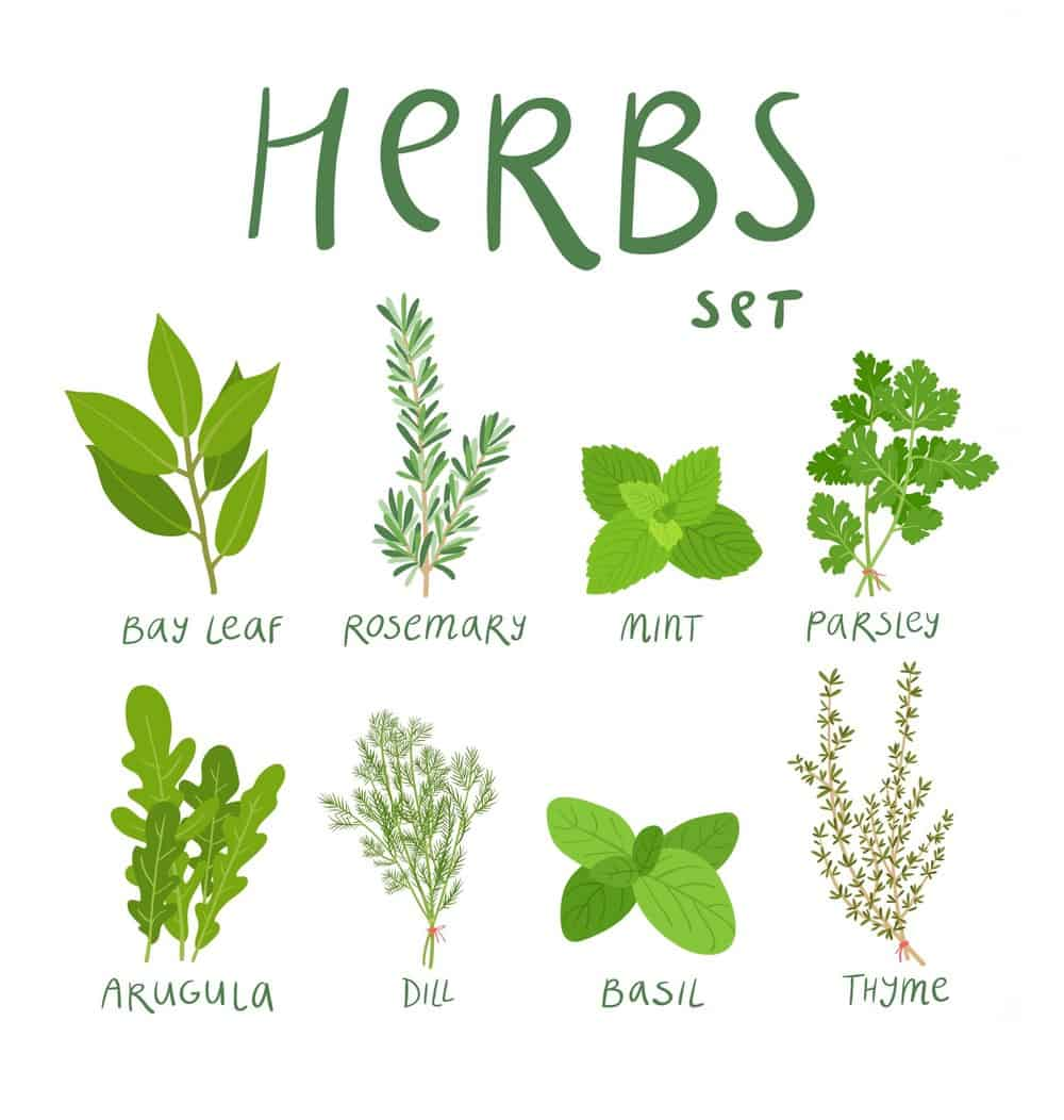 "A graphic with the title ""Herbs"" depicting various herbs."