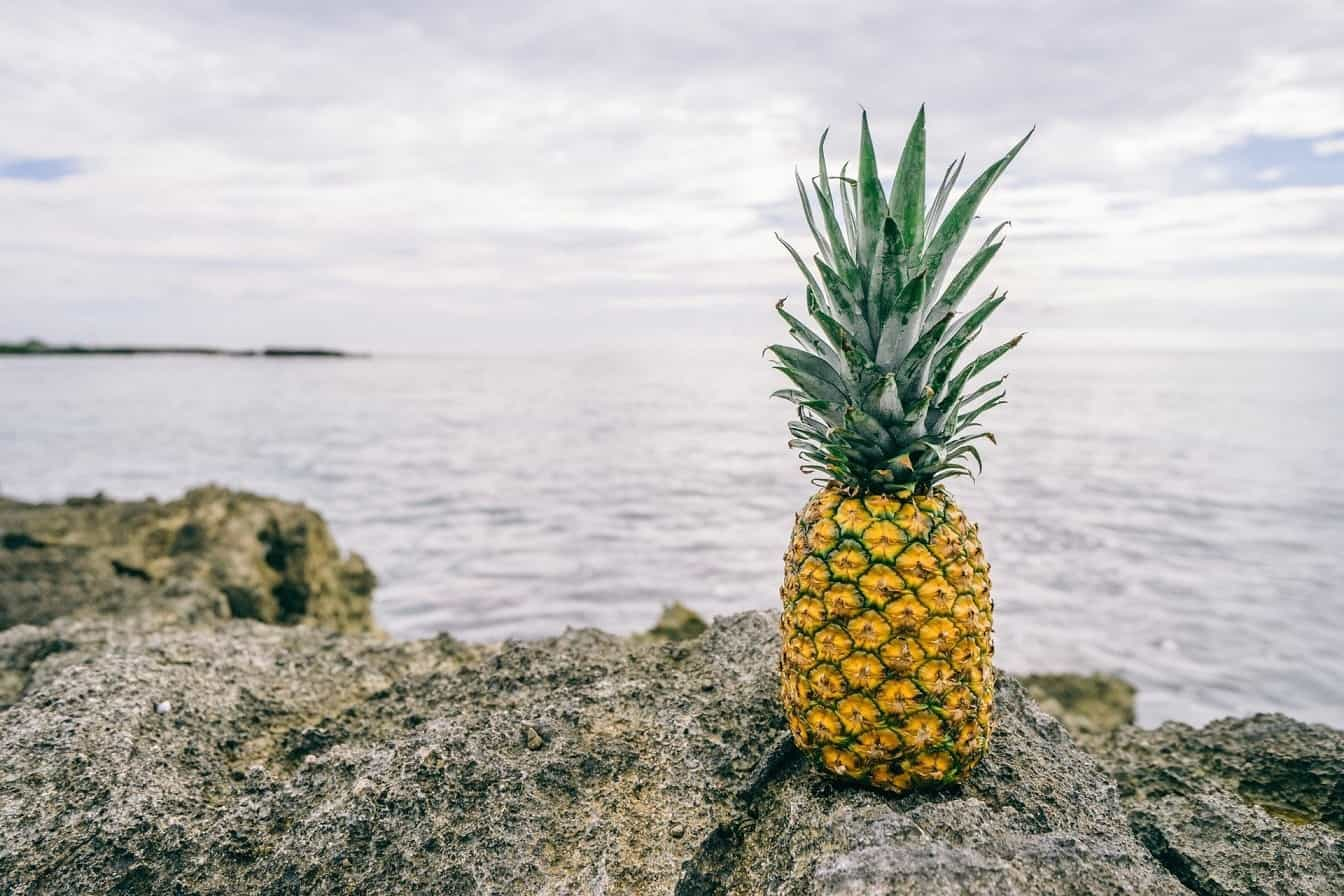 A pineapple on an ocean shore.