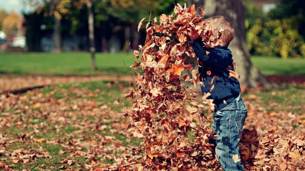 A child playing with leaves in a park.